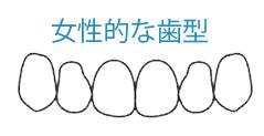 女性的な歯