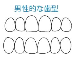男性的な歯