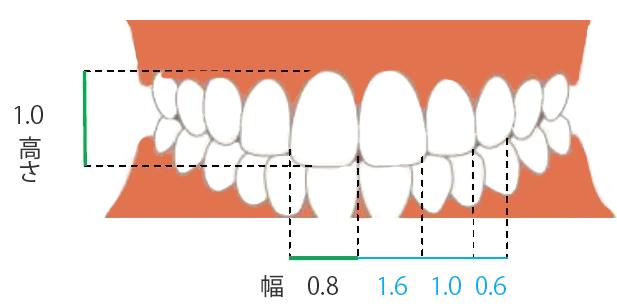 「歯のサイズ」も審美性に大きく影響